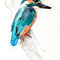 Kingfisher 2012 - Chiara Tomaini