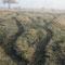 Durch die Tiere angelegter Weidepfad