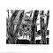 RHN-096 南方の声(二十六)