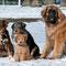 Spaziergang mit Hundefreunden am 15. März 2013
