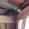 ...sowie die Amsel, die in der Nachbarhütte ihr Nest bezog