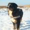 Alix genießt den Schnee...