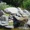 20200519 Wasserauslauf Südteich mit Edelweiss