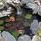 2014 Teich mit Seerosen