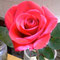 エペルネでの最終日はバレンタインデイだったため、エペルネのクラブが女性の奨学生やロータリアンに美しいバラを贈ってくださりました。