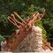 murs d'enceintes bois pierres