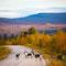 Reindeer in Autumm (Ruska). Picture: VisitLapland.