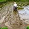 手前のUターンでは、田植え機械を一旦、土から上げてやるべき だった。機械の轍が出来てしまった。