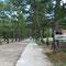 松の参道、左右を歩く。真ん中は神様が通る。
