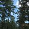 樹齢400年、気持が良い参道だ。
