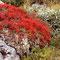Bierikjávrre/Sarek Nationalpark