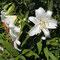 Degli Iris del Clos Normand