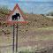 Elefanten haben wir nicht gesehen, dafür Giraffen