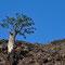Mit wie wenig so ein Baum leben kann