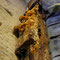 Curieux champignons sur un étai en bois.