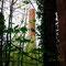 La cheminée en briques à travers le rideau d'arbres.
