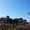 大阪城と梅林⑦(3月上旬)