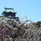 大阪城梅林(梅の名所)