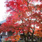 永源寺の庭園