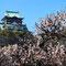 大阪城と梅林②(3月上旬)