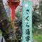 さくら通学路(平野神社の脇道)
