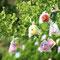 ひかりの実(「パンテオン-神々の饗宴-」より)/高橋匠太氏/2015年 京都府立植物園