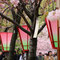 造幣局の「桜の通り抜け」
