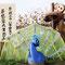 申年から酉年へ(篠まごころホーム)亀岡夢コスモス園かかしコンテスト2016年