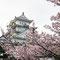 姫路城のお花見