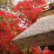 永源寺のヨシ葺き屋根