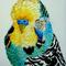 インコ  F0(180x140mm)キャンバス 刺繍、