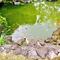 金の鯉と赤ちゃん鯉がいました。