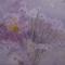 たんぽぽ  -月夜の晩に-   65.2×100.0cm(M40)