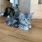 Ivy, 12 Wochen
