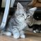 Ivy, 9 Wochen