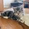 Ivy, 11 Wochen