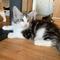 Ivar, 12 Wochen