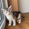 Irina, 9 Wochen