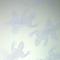 W6300 04 opale