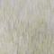 W6895 01 vert pomme