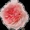 Mayra-Pink