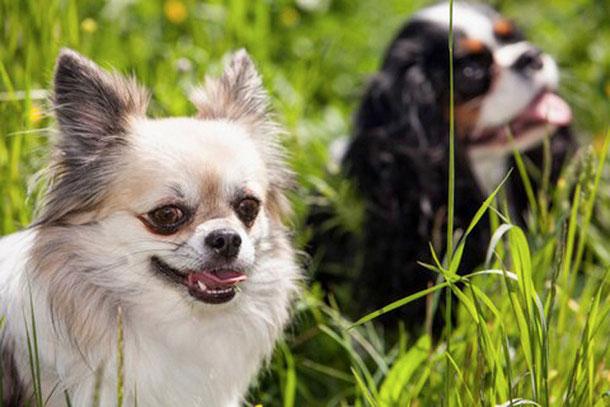 fellspeziell - Ihr Hundefriseur in Straß in der Steiermark