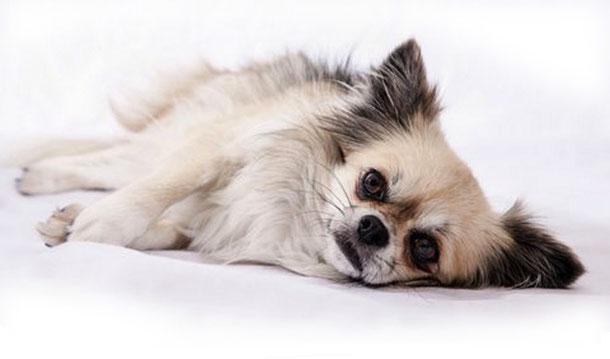 fellspeziell - Ihr Hundefriseur in der Südsteiermark