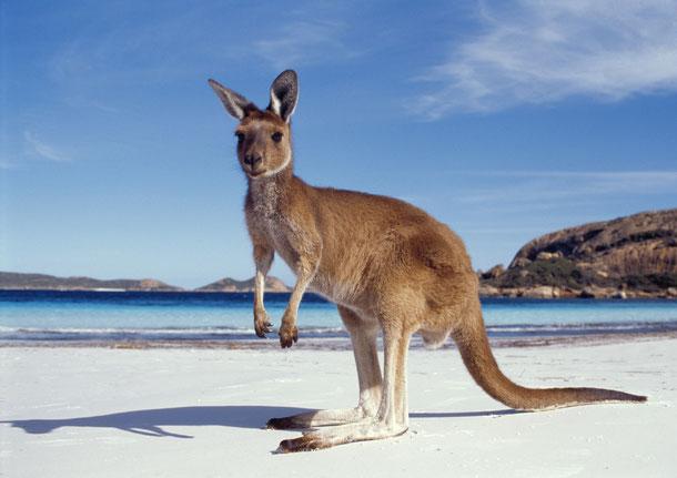 Australia! Bald meine neue Heimat für mindestens ein halbes Jahr :)