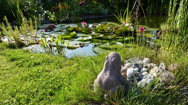 Gartenteich mit Seerosen