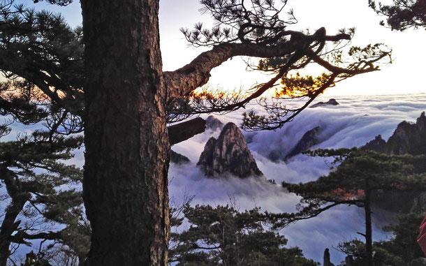 世界遺産「黄山(中国)」の雲海と黄山松