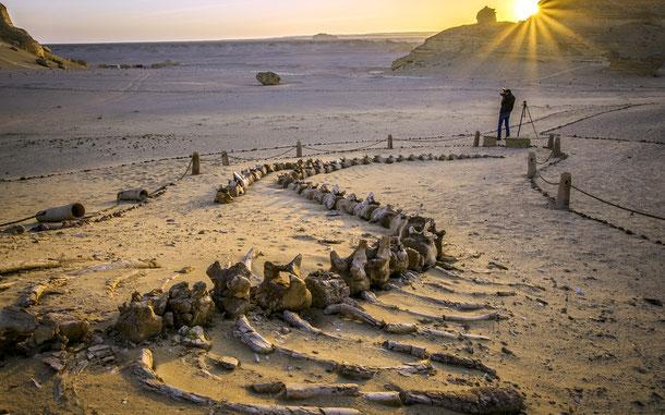 エジプトの世界遺産「ワディ・エル・ヒタン[クジラの谷]」