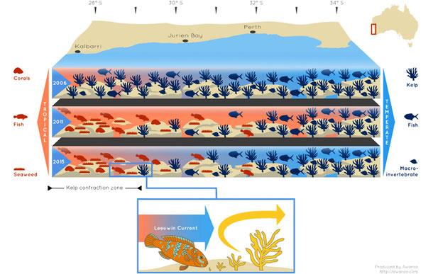 シャーク湾における2006年、2011年、2015年の生態系の変化 (C) Awaroo http://www.awaroo.com