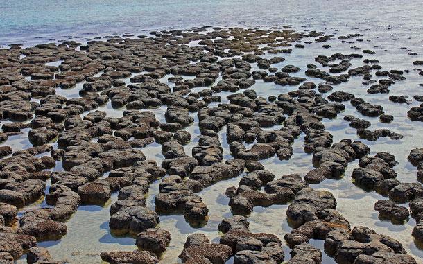 世界遺産「西オーストラリアのシャーク湾(オーストラリア)」のストロマトライト