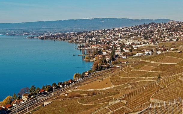 世界遺産「ラヴォー地区の葡萄畑」
